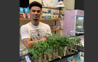 Bay Area Cannasseur: Cannabis plants now available in San Francisco